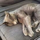 Dieren: hoe ze slapen en dromen