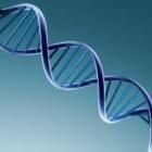 De invloed van genen op evolutie