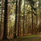 Het bioom: Loofbos en naaldbos - klimaat, ligging en bodem