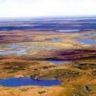 Het bioom: Toendra - klimaat, ligging, bodem en dierenleven