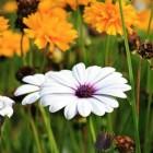 Symbolische betekenis van bloemen