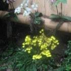 De meeste orchideeën zijn gemakkelijk in bloei te houden