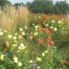 Dahlia's vullen uw tuin met bloemen in prachtige kleuren