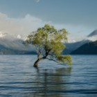Herplanten van echte kerstboom is denken aan het milieu
