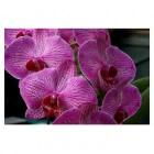 Orchidee: verzorging per seizoen en promotieverenigingen