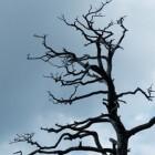 Dode takken of dood hout in de boom, wat nu?