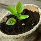 Planten stekken en verzorgen, hoe doe je dat?