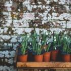 Welke kamerplanten verdienen een plekje in de spotlights?
