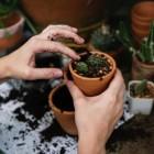 Wanneer moet je een kamerplant verpotten en hoe doe je dat?