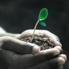 De functies en toepassing van plantenhormonen