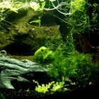 Aquariumplanten, verzorging en onderhoud