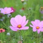 Een wei met bloemen