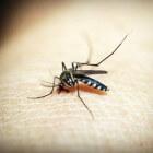 Planten die muggen wegjagen