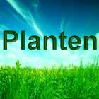Aparte plantenweetjes