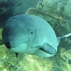 Bruinvissen in de Noordzee en kadavers op het strand