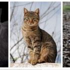 Katten schieten op Schiermonnikoog en andere Waddeneilanden