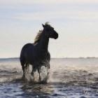 Voortekens & Voorspellen - Katten Paarden Spinnen
