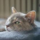 Dementie bij katten