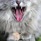Help, mijn kat is agressief