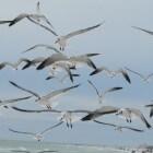 Migratie bij dieren
