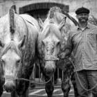 De Percheron – een legerpaard uit vervlogen dagen