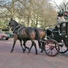 Cleveland Bay – het oudste paardenras van Groot-Brittannië