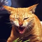 Kattengedrag: wat te doen als je kat bijt