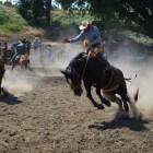 Quarter Horse – het paard uit het Wilde Westen