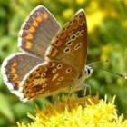 De eerste vlinders in het voorjaar