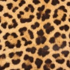Luipaard, Afrika´s mooiste roofdier