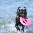 Een blindengeleidehond is ook een huishond