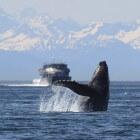 Bultrug en griend zijn walvisachtigen