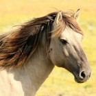 Paardengedrag: Help, mijn paard wil de trailer niet in
