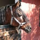 Mijn paard is een kribbebijter. Wat nu?