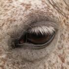 Zintuigen van het paard - Het gezichtsvermogen