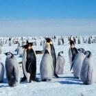 Het leven van de verschillende dieren op Antarctica