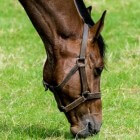Mest of zand eten en nog ander vreemd eetgedrag bij paarden