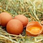 De smaak van eieren: Zo leggen je kippen goede eieren