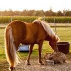 De drie onderdelen van een goed voermanagement voor paarden