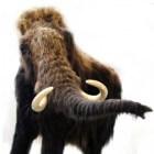 De wolharige mammoet: de langst overlevende der mammoeten
