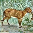 De voorouders van het paard: Hyracotherium of Eohippus