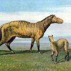 De voorouders van het paard: Orohippus