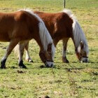 Weilandbeheer voor paarden