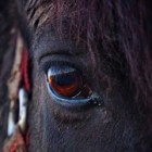 Het masseren van je paard