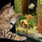 Appelslakken in het aquarium houden