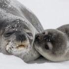 Antarctica en zijn zeehonden