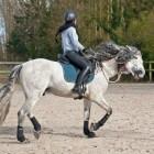 Beginnen met paardrijden