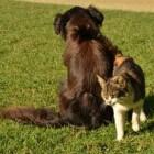 Adopteren dieren ook wel eens andere dieren?