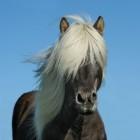 Het paard: verschillende rassen