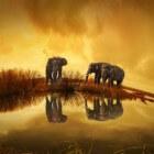 De olifant: ware kuddedieren